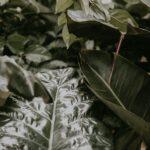 Een grote palm binnen voor een exotische tint in je interieur